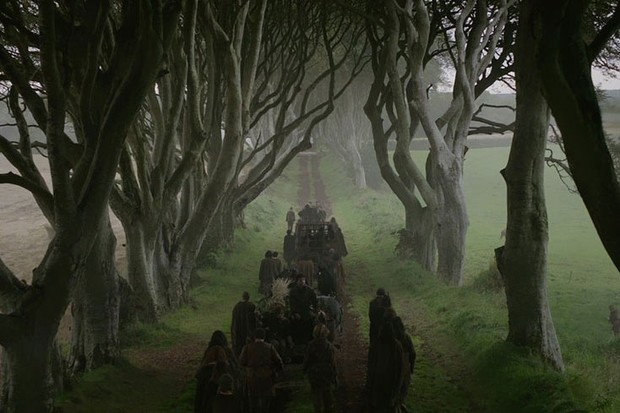 dark-hedges-5515eda.jpg